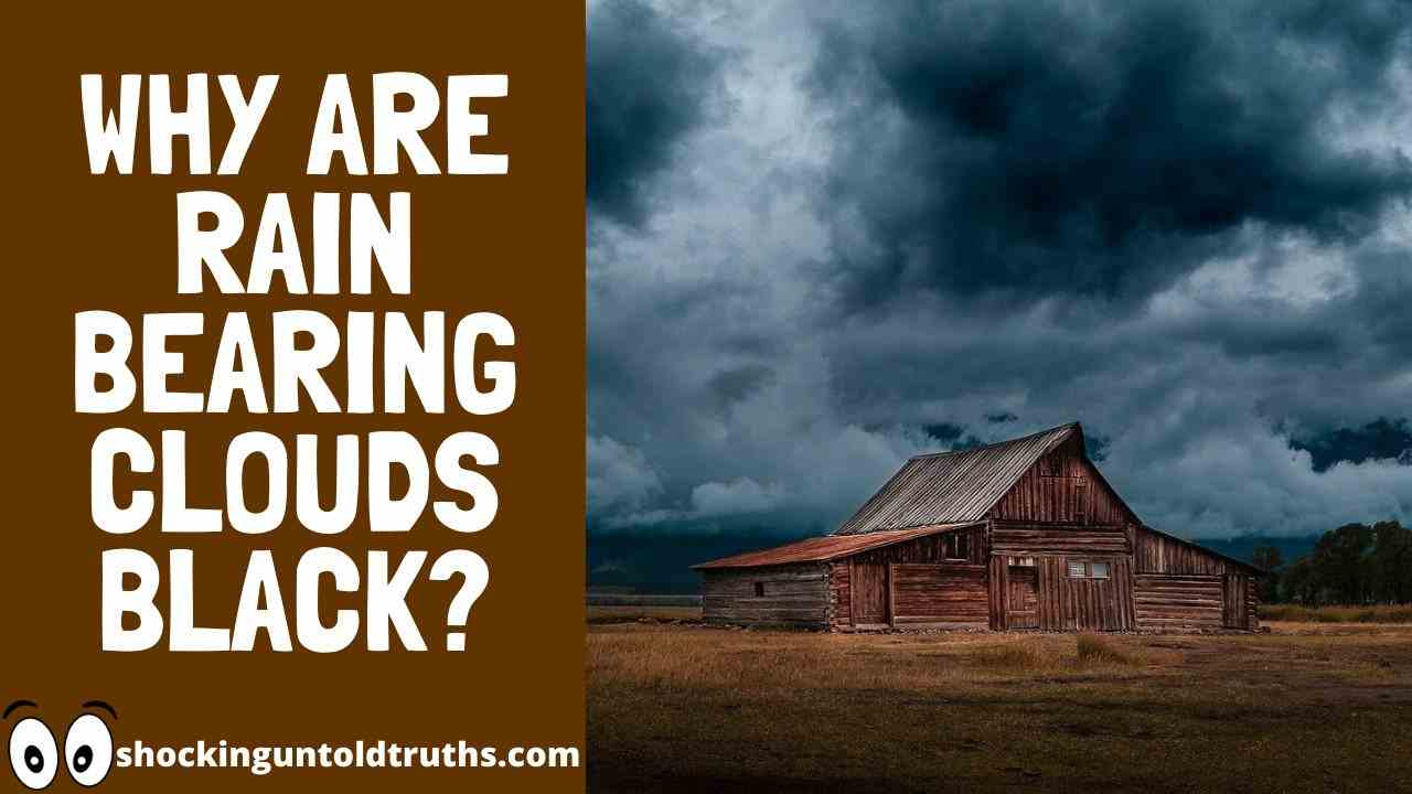Why Are Rain Bearing Clouds Black?==>🤔[2020+ TRUTHS!]